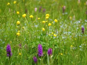 Von Waldglas, alten Mühlen und trolligen Blumen