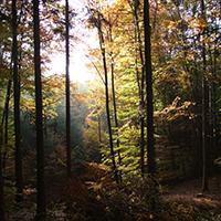 Bäume des Spiegelberger Waldes