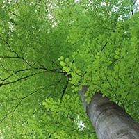 Bäume - mehr als Holz und Laub