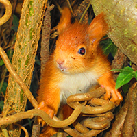Dem Eichhörnchen auf der Spur