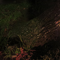 Nacht der Gnome