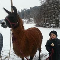 Nikolauswanderung mit Lamas