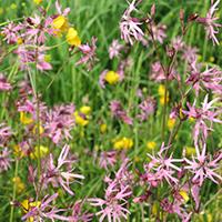 Blumenwiesen-Exkursion mit Wiesenmemory