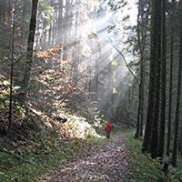 Wozu brauchen wir den(n) Wald