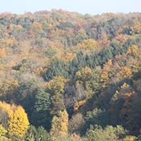 Herbstwald in den Berglen