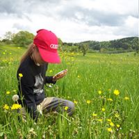 Essbare Blüten sammeln, verarbeiten und verkosten