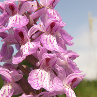 Orchideen am Straßenrand