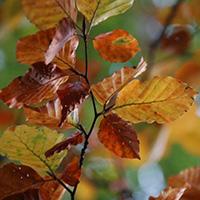 Herbstwanderung durch den Ochsenhau