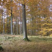 Im stillen Wald bei Voggenberg
