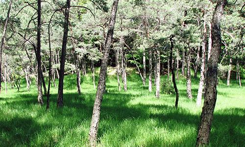 171210 B NPaktiv Elsäßer Naturpark aktiv: Und auf der Viehweide gibt es Bergleswasser