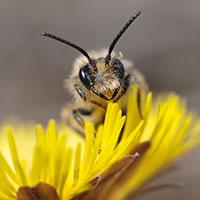 17 NPT Wer summt den da Raimund Knauf VDN Bauarbeiten im Winter: Ein Häusle für Wildbienen