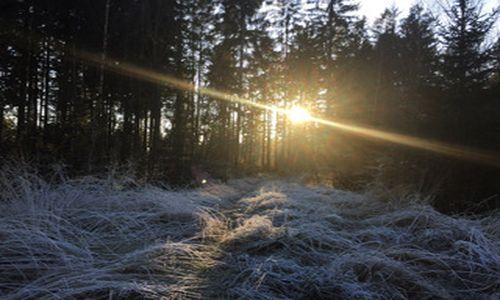 Naturpark aktiv: Start in´s neue Jahr   Raunachtwanderung