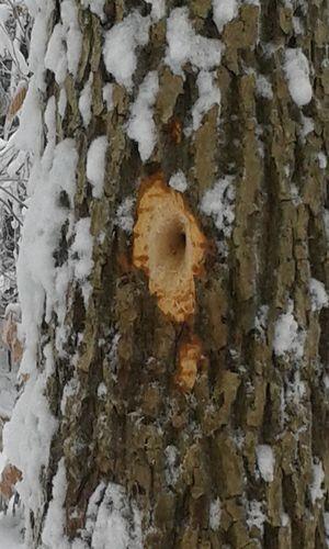 18.01.21 NP aktiv Reiss Naturpark aktiv: Winterschlaf   Winterfell   Winterspeck