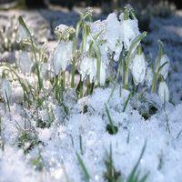 Frühlingsboten um Sittenhardt