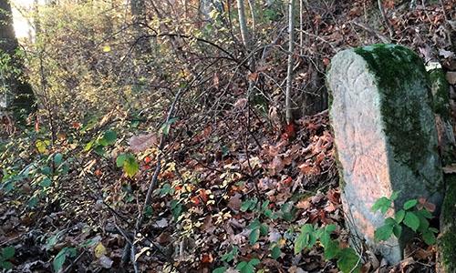 18.04.15 NP aktiv  Frey Naturpark aktiv: Unterwegs im Grenzgebiet