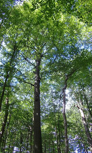 18.04.29 Np aktiv Ehrle Naturpark aktiv: Erholung pur im Wald