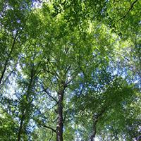 Erholung pur im Wald
