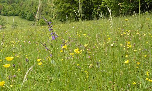 18.05.10 NP aktiv Rombach Naturpark aktiv: Kulinarische Kräuterwanderung