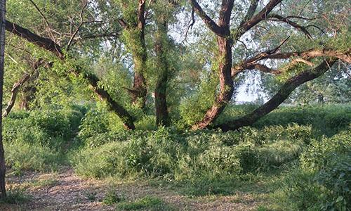 18.05.27 NP aktiv  Klinger Naturpark aktiv: Blattgeflüster