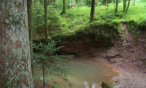 18.05.31 NP aktiv Koehler Naturpark aktiv: Mit dem Kerner im Rucksack durch den Bannwald