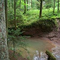 Mit dem Kerner im Rucksack durch den Bannwald