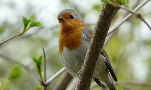 18.06.03 NP aktiv Ehrle Naturpark aktiv: Alle Vögel sind schon da