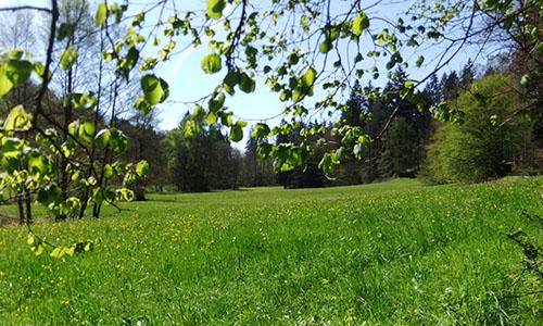 18.06.10 NP aktiv Mattheis Naturpark aktiv: Rundherum und Querbeet im Sandland