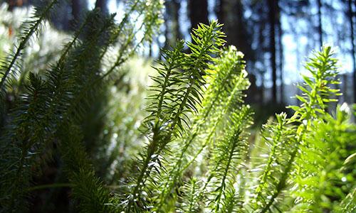 18.06.17 NP aktiv grimminger Naturpark aktiv: Die südlichsten Naturpark Attraktionen