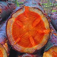 Naturpark aktiv: Holzwunder