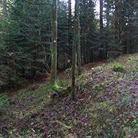 Naturpark aktiv: Walderlebniswanderung