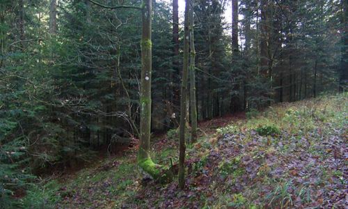 18.07.22 NP aktiv Koehler2 Naturpark aktiv: Walderlebniswanderung