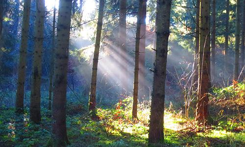 18.09.16 NP aktiv genthner.jpg Naturpark aktiv: Die geheime Sprache der Bäume