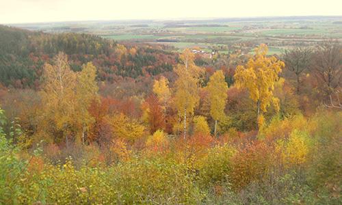 18.10.21 NPaktiv Hieber Naturpark aktiv: Herbstliche 25 km Tour durch Wald und Weinberge