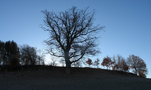 18.11.01 NP aktiv Angstenberger.Helene Naturpark aktiv: Die Zeit um Samhain
