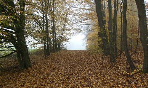18.11.01 NP aktiv Elsaesser Naturpark aktiv: Auf Schleichwegen durch die Berglen