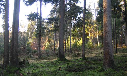 18.11.04 NP aktiv Ruecker Naturpark aktiv: November Blues im Lumpenlochwald