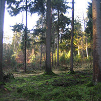 November-Blues im Lumpenlochwald