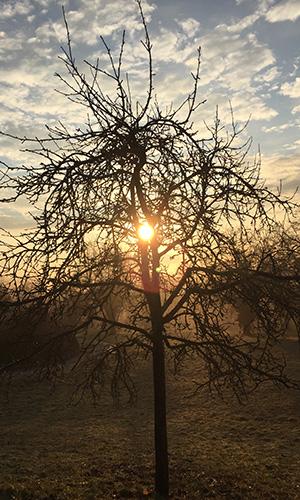 18.11.18 Np aktiv Koehler Naturpark aktiv: Die grauen Nebel hat das Licht durchdrungen