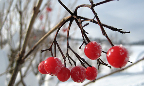 18.12.09 NP aktiv Sanwald Naturpark aktiv: Väterchen Frost