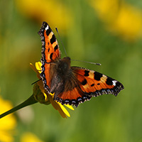 Blühender Naturpark - erfreut Mensch und Tier!