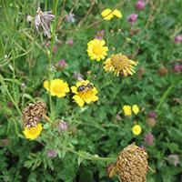 Multiplikatoren für die Biodiversität