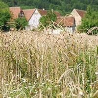 Der Naturpark auf dem Landwirtschaftlichen Hauptfest in Bad Cannstatt