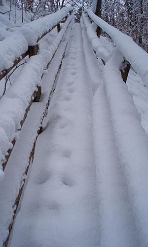 190113 NPaktiv Reiss Naturpark…bewegt! Im Wandel der Jahreszeiten: Winter