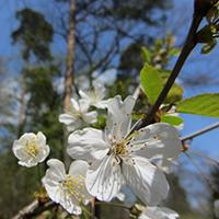 Mit Naturparkführern auf der Suche nach Frühlingsboten