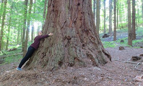 190407 NPaktiv Genthner Naturpark…erzählt! Höchster Mammutbaum Deutschlands