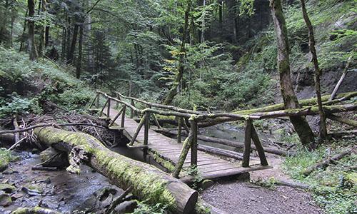 190624 BILD Sommer Kuehnle Mit den Naturparkführern zu kühlen Wäldern und Schluchten