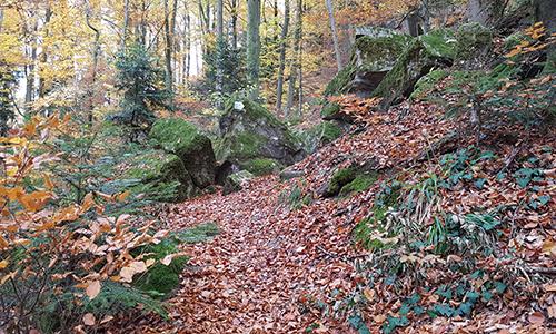 190714 NPaktiv Schulz Naturpark…bewegt! Rauschende Wasserfälle und urwaldartige Schluchten