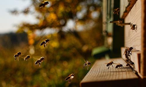 190728 NPaktiv Schulz Naturpark…erzählt! Bienen und ihre Wunderwelt