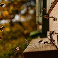 Bienen und ihre Wunderwelt
