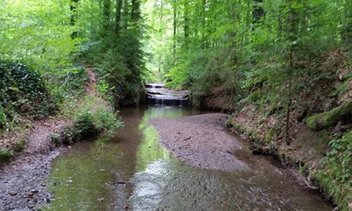 190818 NPaktiv Ehrle Naturpark…erzählt! Ein Bach im Wald